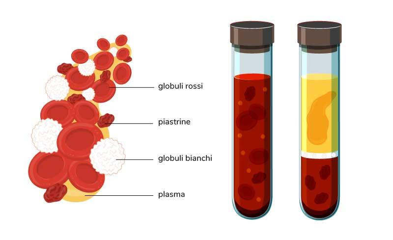 sangue-e-componenti-avis-veneto